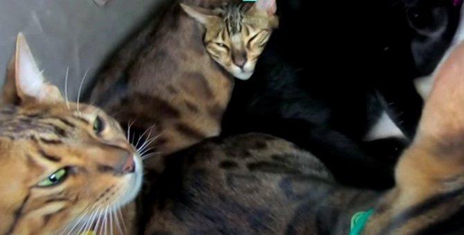 6匹の猫さんファミリーが帰宅!車内の様子を見てみよう♡