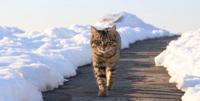 寒い地域の野良猫達はどう暮らしてる?7つの過ごし方