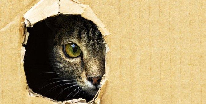 猫が飼い主に不信感を持っている時の仕草や行動5つ