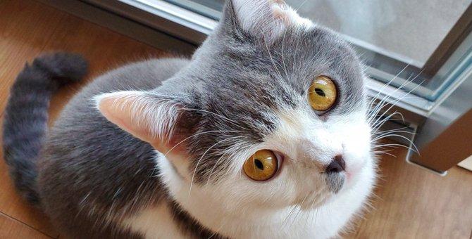 LAYLAの12猫占い【6/29〜7/5】のあなたと猫ちゃんの運勢