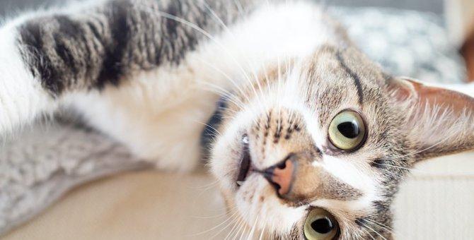猫は自分が怒られているのをわかっているの?