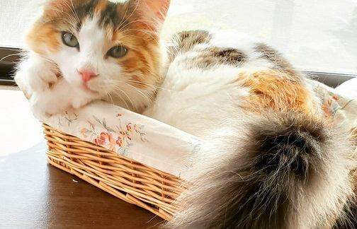 猫の『しっぽ』取扱説明書!可愛いからといって無理に触るのはやめましょう