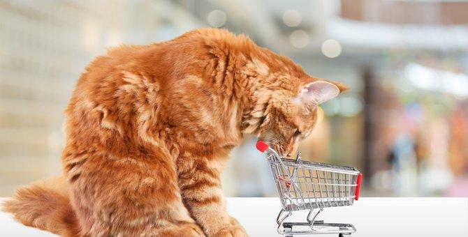 猫用品専門店5選!人気グッズや売れ筋商品まで