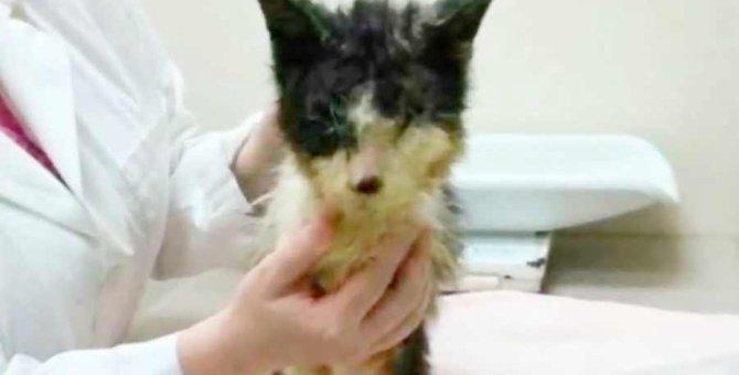狭いキャリーに2年も幽閉された猫…優しい家族と幸せに!