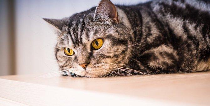 『欲求不満を溜めた猫』がみせる問題行動5つと対処法