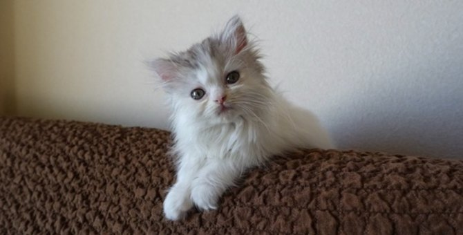 念願のふわふわ保護猫との生活…心に芽生えた飼い主としての思いとは?