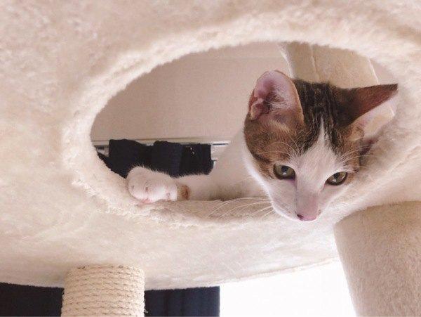 猫がビビりな3つの理由と暮らしの中での注意点