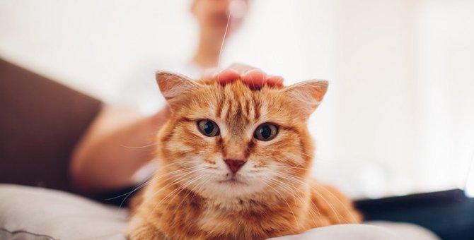 猫を保護したらまずしたいこと!迎え入れるための第1歩を知ろう