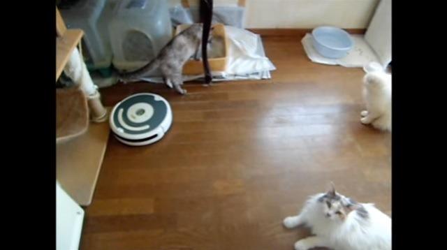 「これは便利ニャ♪」ロボット掃除機をタクシー感覚で利用する猫