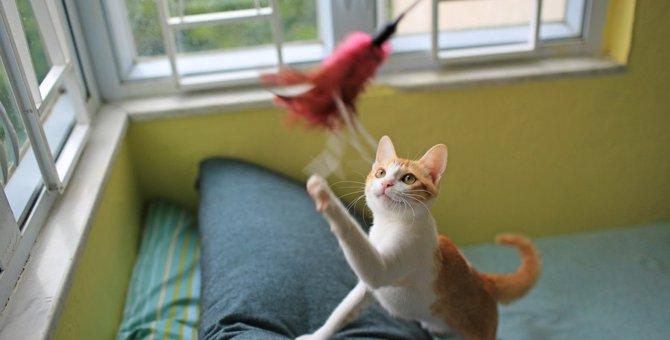 猫が喜ぶ『猫じゃらし』の遊び方6選!種類別の上手な使い方とは?