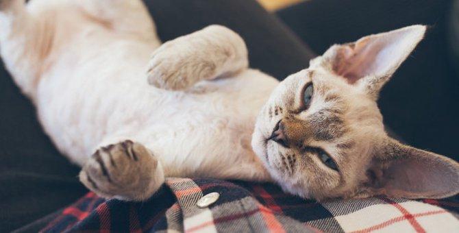 猫がお腹を見せる5つの理由