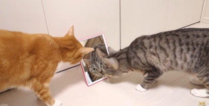 「この猫はだれにゃ?」鏡にうつる美人猫の謎を解明せよ!