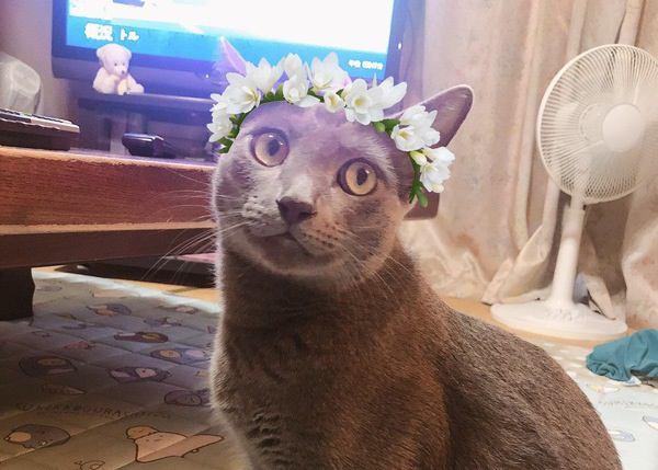 猫のいるお部屋に飾っても大丈夫な生花4つ