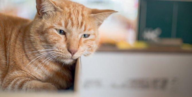 季節の変わり目は要注意!猫の危険な『春ストレス』5つと対処法