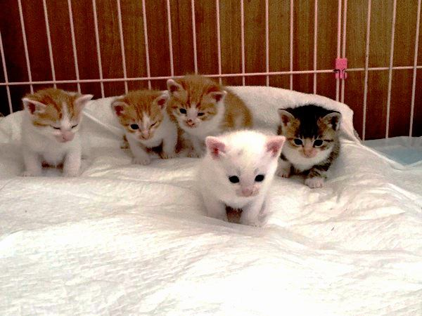 守らないといけない『猫同士のマナー』5つ