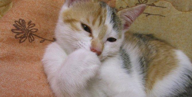 はじめての猫!里親サイトを利用して素敵な家族をお迎えしました