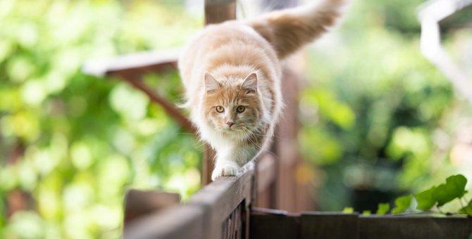 猫が『のそのそ歩き』をする理由5選