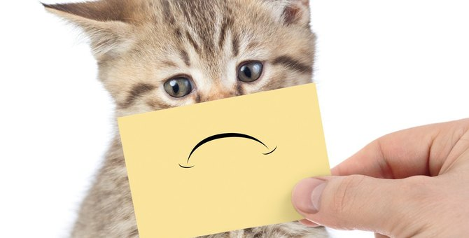 猫に『スルーされがちな飼い主』の共通点5つ!今すぐできる改善策とは?