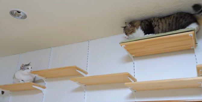 大好きな猫姫を探せ!!