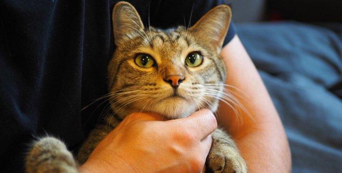 猫が大好きな『撫で方』ランキングTOP4
