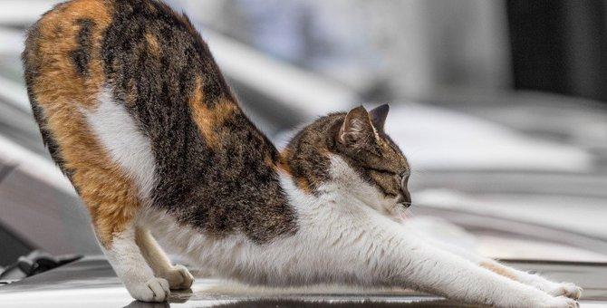 猫が『背筋を伸ばす』4つの理由!伸びると得られる効果とは?