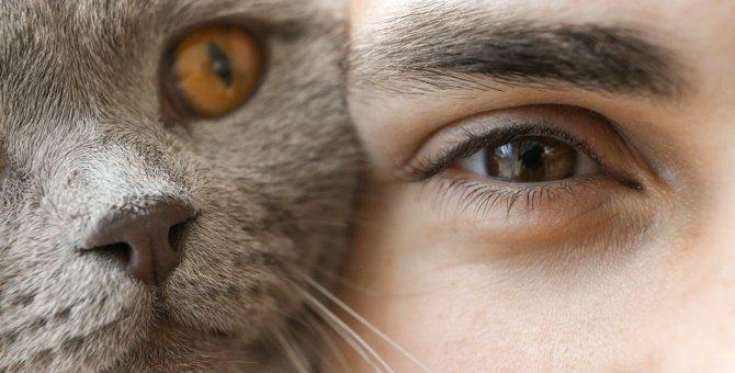 猫が『相思相愛だよ♡』と伝えたいときの仕草6つ