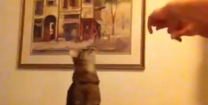 耳が聴こえなくても大丈夫!手話で意思疎通する猫ちゃん