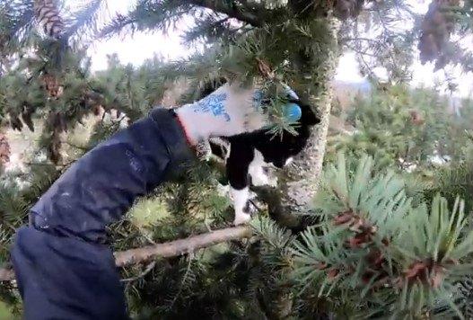 高さ約30mの木の上に猫が…決死の救助活動がスタート!