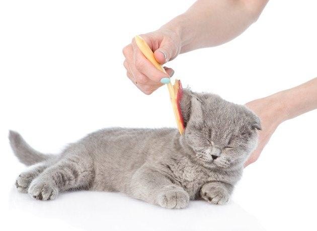 猫のブラシ「フーリー」使い方やおすすめする3つのポイント