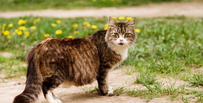 猫に生理はない!出血がある場合疑う3つの病気