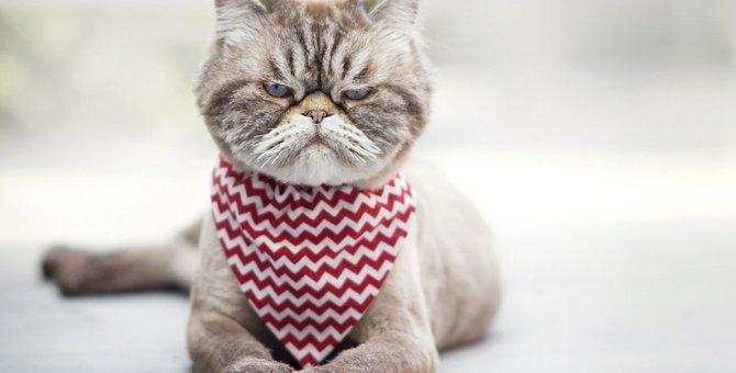 不機嫌な猫の写真10連発