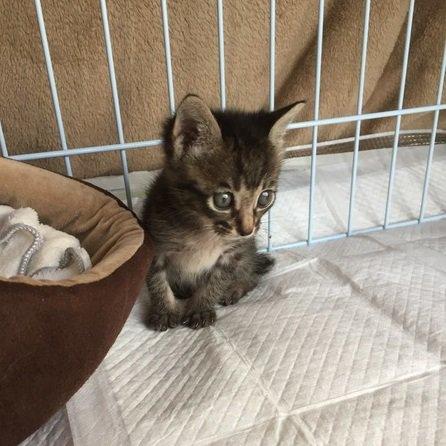 たくさん食べて大きくなってね♡センターで保護された赤ちゃん猫の兄弟のお世話を体験して