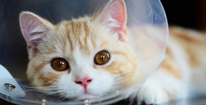 猫の顔や耳に『はげ』ができる4つの原因!その予防法をチェック