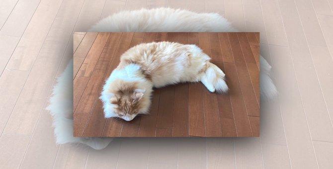ころもサクサク♪特大エビフライ猫が立派で美味しそうと話題!