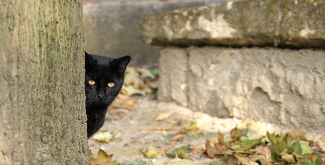 【世界にゃん事情】フランス パリで暮らす猫たち
