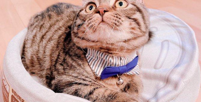 猫を迎える前に確認すべき5つのこと