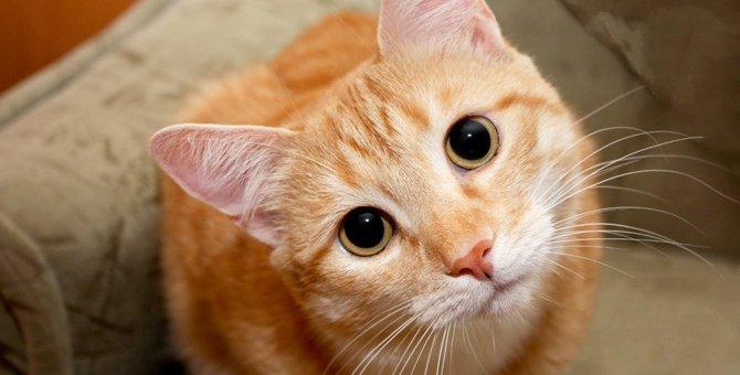 猫が飼い主を怪しんでいる時の行動4つ