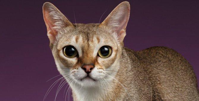 猫に「愛が足りない…」と感じさせる飼い主の行動8つ