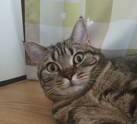 猫が挙動不審になってしまうシチュエーション6つ