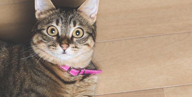 猫の行動を知って猫ともっと仲良くなる