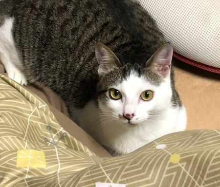 猫が見せる『寂しかったサイン』5選