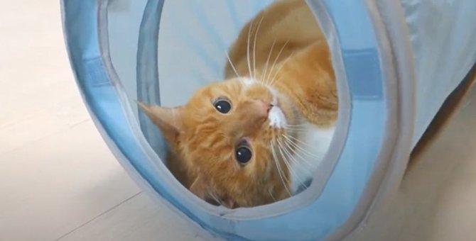 楽しい!激しめにトンネルで遊ぶ猫ちゃん♡