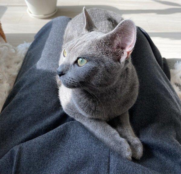 愛猫は『甘えん坊』?見極めポイント5つを紹介!
