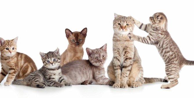 先住猫と仲良くするには?多頭飼いの注意点や馴染めない子の対処法
