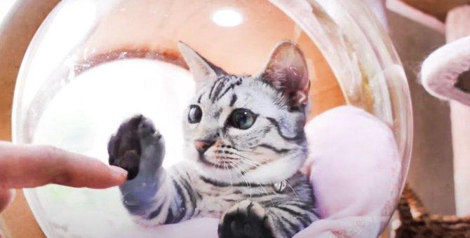 あれ?触れない?窓越しにじゃれる子猫ちゃんがかわいい♡