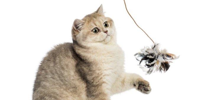 猫が喜ぶ様々な方法の遊び方について