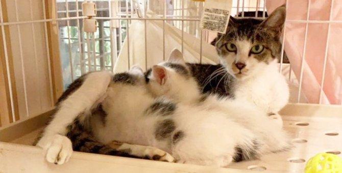 3本足の母猫を保護…2匹の子猫たちとの行く末は?