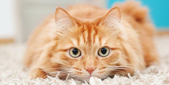 猫の『免疫力』が低下しているときの症状3つと対処法
