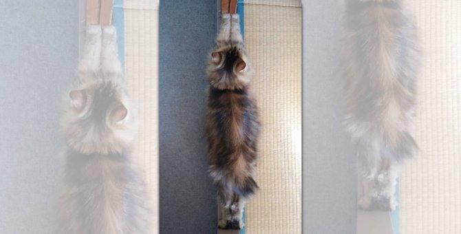『伸びた猫は襖一枚分』説が浮上!話題の画像にネット民騒然!