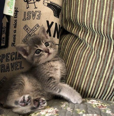 猫が振り向くのはどんなとき?6つのシチュエーション